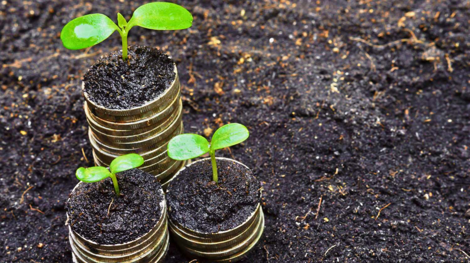 Feature | seedlings plant soil Go Green With These Self-Directed IRA Investment Options | Inside Your IRA | eco-friendly