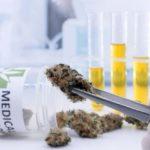 Feature   tweezers hold cannabis bud laboratory   Medical Marijuana Stocks To Watch Out For   Inside Your IRA   medical marijuana