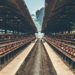 brown wooden poultry farm | What You Need to Know About Investing in Livestock Inside Your IRA | farm animals list | farm animals in livestock investment | Featured