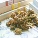 Feature   marijuana and money   Medical Marijuana Stocks vs Recreational Marijuana Stocks: Which Fits Your Portfolio the Best?   Inside Your IRA   best marijuana stocks